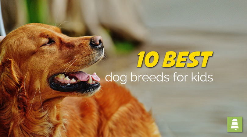 10 Best Dog Breeds for Kids